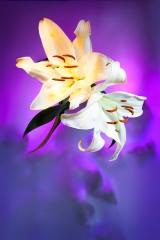 06_prakriti_flowers