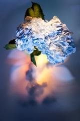 07_prakriti_flowers
