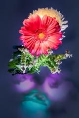 09_prakriti_flowers