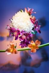 11_prakriti_flowers
