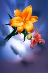 15_prakriti_flowers