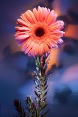 17_prakriti_flowers