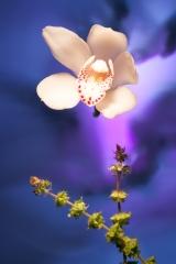 18_prakriti_flowers