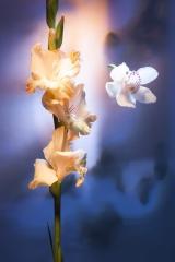22_prakriti_flowers