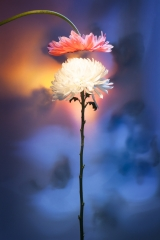 24_prakriti_flowers
