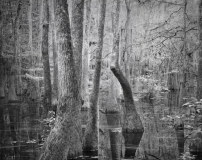 Still_Waters__03